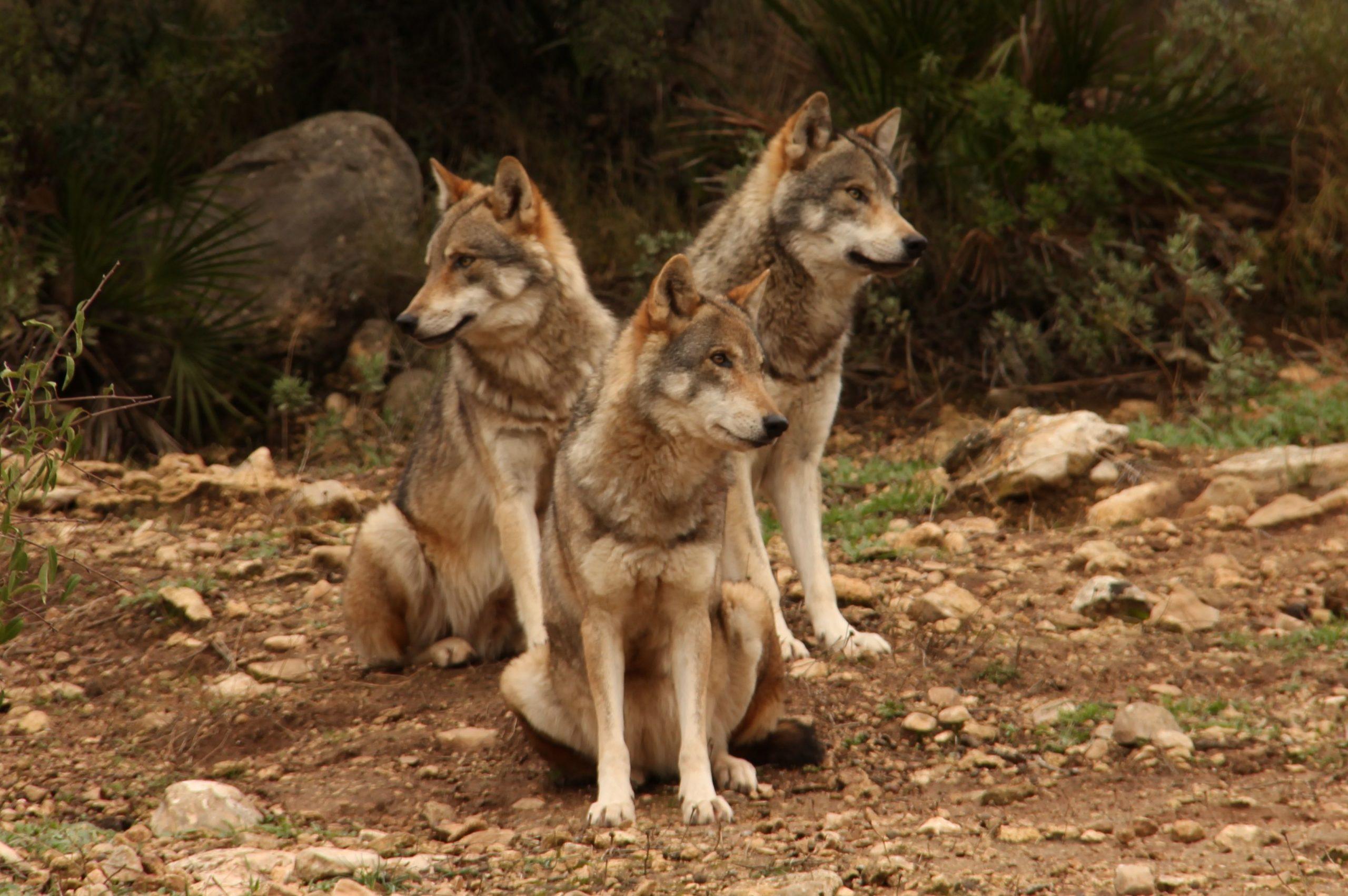 parque lobos malaga