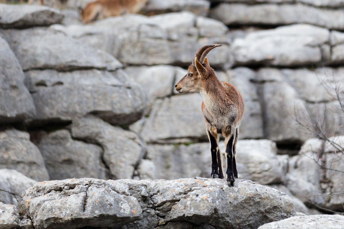 Torcal Antequera Cabra